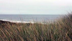 Northern California Sand Dune 2 stock video footage