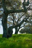 Northern California spring. Green hills Royalty Free Stock Photos