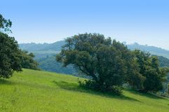 Northern California Spring. Hills Stock Photo