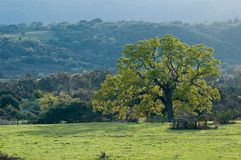 Northern California spring landscape Royalty Free Stock Photo