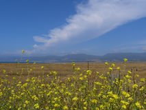 Northern California View. Mountain View from a field of yellow flowers Stock Image