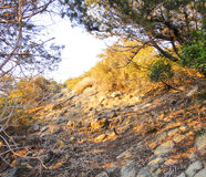 Northern Cyprus valley. Sunset forest Royalty Free Stock Images