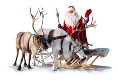 Northern deer royalty free stock image