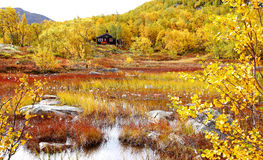 Northern Fall Foliage. Northern landscape in autumn / during fall foliage season with rustic cabin in background, taken in the Hardangervidda in Norway stock photos