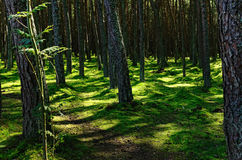 Northern Forest Contrastingly Lit by Sun Stock Photography