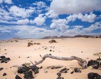 Northern Fuerteventura, Corralejo sand dunes Stock Images