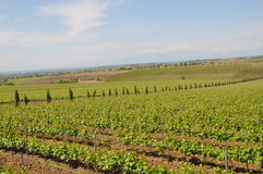northern Greece wine estate with the sea Royalty Free Stock Images