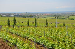 northern Greece wine estate with the sea Royalty Free Stock Image