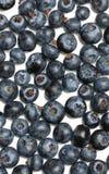 Northern highbush blueberry background isolated Stock Photos