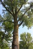 Northern Illinois Nature Stock Image