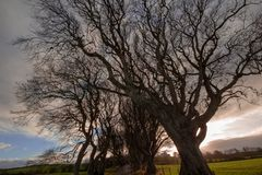The Dark Hedges. The Game of Thrones. royalty free stock images