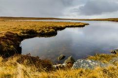 Northern lake Royalty Free Stock Image