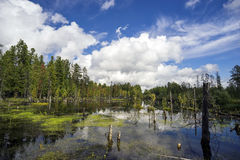 Northern landscape with boggy lake. Stock Photography