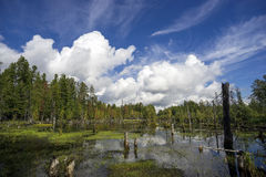 Northern landscape with boggy lake. Royalty Free Stock Image