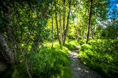 Northern landscape and nature in alaska panhandle stock photography