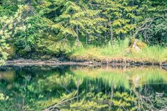 Northern landscape and nature in alaska panhandle stock photos