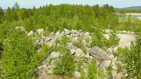 Northern landscape with pines and rocks. Russia stock footage