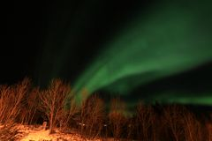 Northern Light  above Lofoten birches Stock Photos