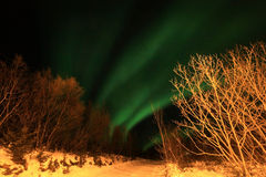 Northern Light  above   Lofoten's forest Royalty Free Stock Photo
