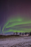 Northern light (aurora borealis) during dawn with trees and snow in the foreground Stock Photo