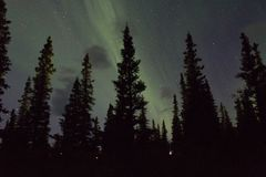 Northern lights arcoss the blacked skies of an Alaskan life staring up at the stars.  Northern lights across the black spruces on. The Alaskan Range Royalty Free Stock Photo