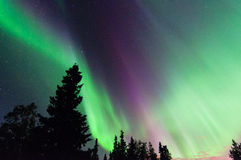 Northern Lights. Around a trees in Alaska Stock Photos