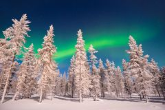 Northern lights, Aurora Borealis in Lapland Finland. Northern lights, Aurora Borealis in Lapland, Finland royalty free stock image