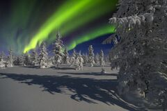 Free Northern Lights - Aurora Borealis Over Snow-covered Forest. Beautiful Picture Of Massive Multicoloured Green Vibrant Aurora Boreal Royalty Free Stock Photos - 188383058