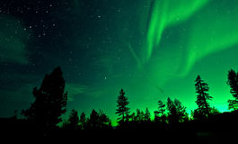 Northern Lights aurora borealis over trees Stock Photo