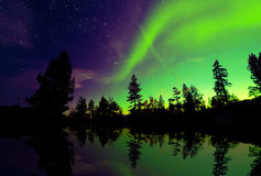 Northern Lights aurora borealis over trees Stock Images