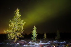Northern lights (Aurora Borealis) Royalty Free Stock Photography