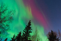 Northern Lights. Dancing over trees Royalty Free Stock Images