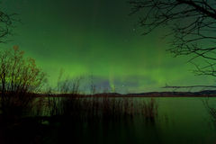 Northern Lights display Lake Laberge shore willows Royalty Free Stock Photo