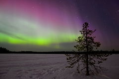 Northern lights. In Finland lapland Royalty Free Stock Photography