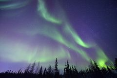 Northern lights and forest Stock Photo