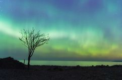 Northern Lights and lonely tree on St. Patrick's Day Royalty Free Stock Photography