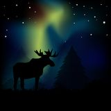 Northern Lights Moose Stock Photography