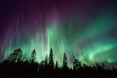 Northern lights over pine trees Royalty Free Stock Photos