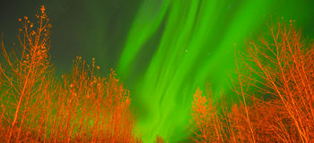 Northern Lights. The Northern lights over trees Stock Photography