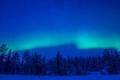 Northern Lights over the Winter Forest royalty free stock photos