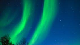 Northern lights, polar light or Aurora Borealis in the night sky stock video footage