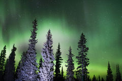 Northern Lights in the Sky Royalty Free Stock Photography