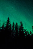 Northern lights in Sweden forest Royalty Free Stock Image