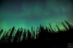 Northern Lights with Trees. Northern lites with trees in Alberta, Canada light up the night Stock Image