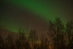 Northern Lights Trees Silhouette Stock Photo