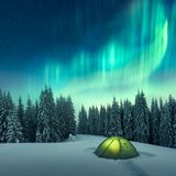 Northern lights in winter forest. Aurora borealis. Northern lights in winter forest. Sky with polar lights and stars. Night winter landscape with aurora, green royalty free stock photography