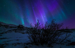 Northern Lights Royalty Free Stock Photo