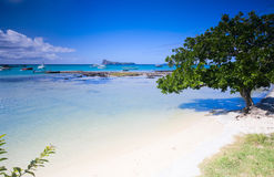 Northern Mauritius. Beautiful white sand tropical beach in northern part of Mauritius Royalty Free Stock Image