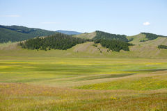 Northern Mongolian Forests and Steppes Stock Photography