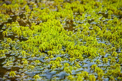 Northern moss grows among water Stock Images